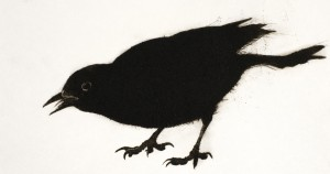 Blackbird (2014), Drypoint Engraving, Edition of 10, 19 x 36cm