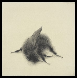 Sarah Gillespie Fallen Bee  2016 Silverpoint with touches of graphite on paper prepared with a traditional bone ground 12.5 x 12.5 cm (4.9 x 4.9 ins)