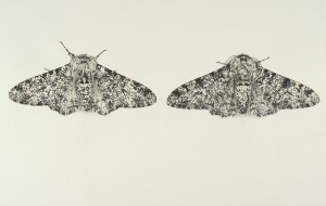 Sarah Gillespie Peppered Moths Charcoal and watercolour on prepared paper 2016 47 x 96 cm (18.5 x 37 2/3 ins)