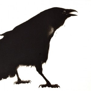 Crow (2013), Drypoint Engraving, 37 x 37cm (14.6 x 14.6 inches)