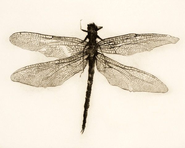 Dragonfly, Drypoint Engraving, Edition 8 of 9, 28 x 25cm