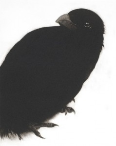 My Heart a Wounded Crow, Mezzotint, 28 x 22.5cm (11 x 9 inches)