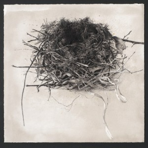 Nest (2013), Ink, Pigment and Charcoal on Arches Paper, 37 x 38cm (14.5 x 15 inches)