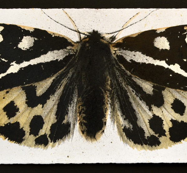 Wood Tiger Moth (2013), Watercolour and Charcoal on 356gsm Saunders Waterford Paper, 19.5 x 44.5cm