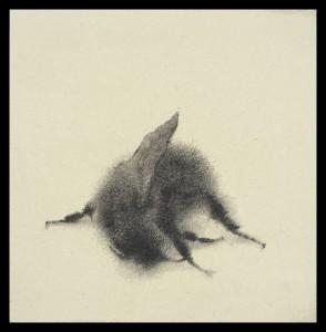 Sarah-Gillespie-Fallen-Bee silverpoint