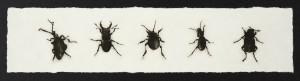 Sarah-Gillespie-Five-English-Beetles