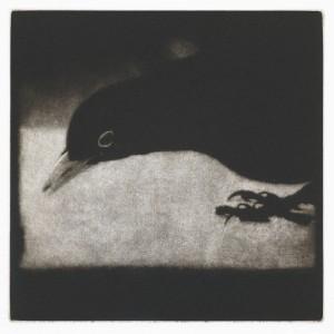 Outside (Songbird), Mezzotint, Edition of 40, 12.5 x 12.5cm