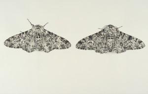 Sarah-Gillespie-Peppered-Moths