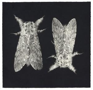 Sarah-Gillespie-Puss-Moths