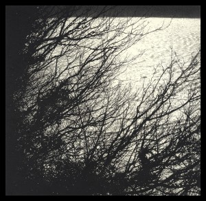 Sarah-Gillespie-Ragged-Tree-Invisible-Wind