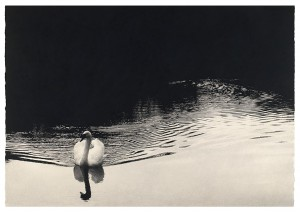 Sarah-Gillespie-Swan