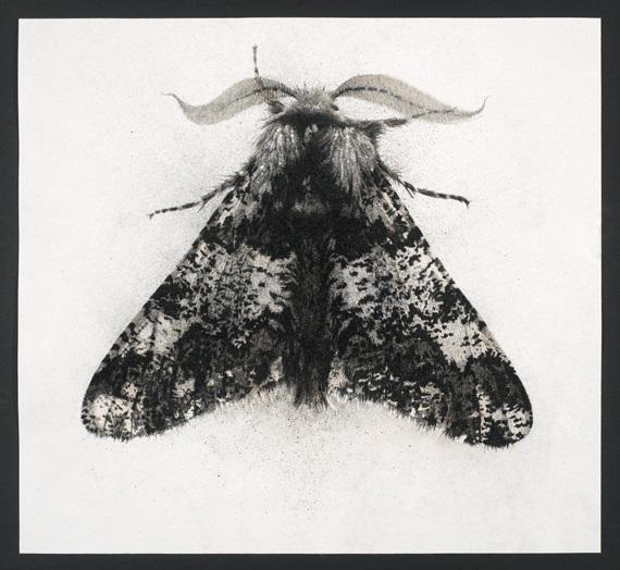 Great Oak Beauty (2013), Ink and Charcoal on Aquari Paper, 53 x 53cm