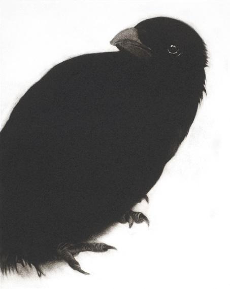 My Heart a Wounded Crow, Mezzotint, 28 x 22.5cm