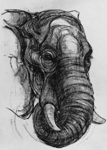 Kendra Haste - Elephant Charcoal