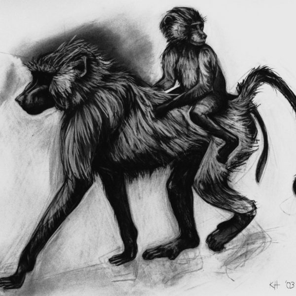 Kendra Haste, Baboon mother and baby, 2003, Charcoal on paper, 84 x 102cm