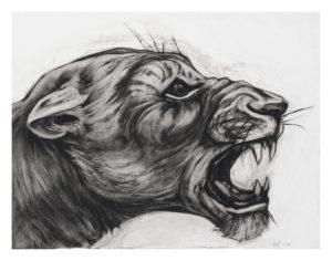 Kendra Haste - Lioness Head Study I