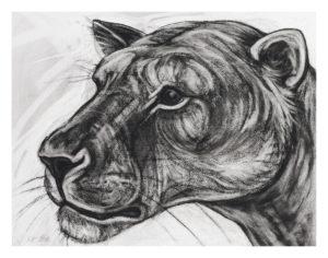 Kendra Haste - Lioness Head Study II
