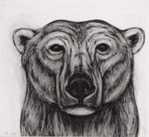 SOLD - Kendra Haste, Polar Bear Head Study II, Charcoal on paper
